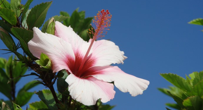 madeira flower_family-friendly_portugal