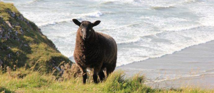 beach_Wales
