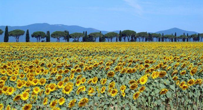 flowers_tuscany