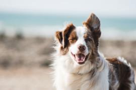 A British Pet Friendly Staycation